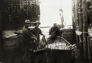 """""""A dory load of the world's most valuable fish… the herring."""""""