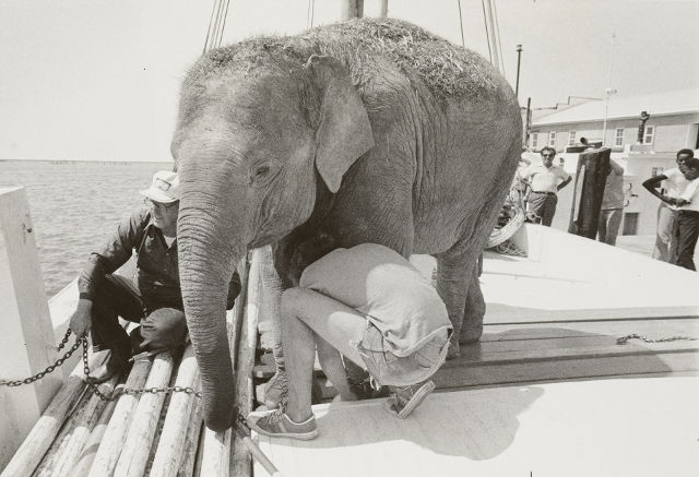 Transporting an Elephant, PMM National Fisherman Collection