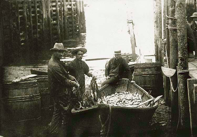"""""""A dory load of the world's most valuable fish... the herring."""""""