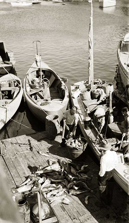 Unloading the Catch at New Harbor