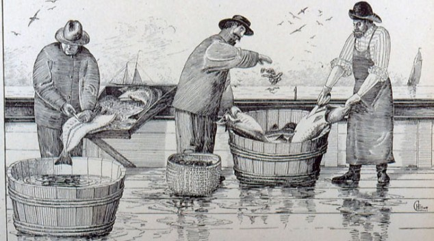 The George's Bank Cod Fishery